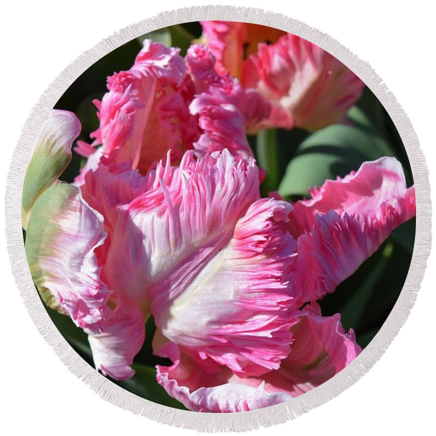 Pink Parrot Tulip Round Beach Towel featuring the photograph Pink Parrot Tulip by Jeannie Rhode