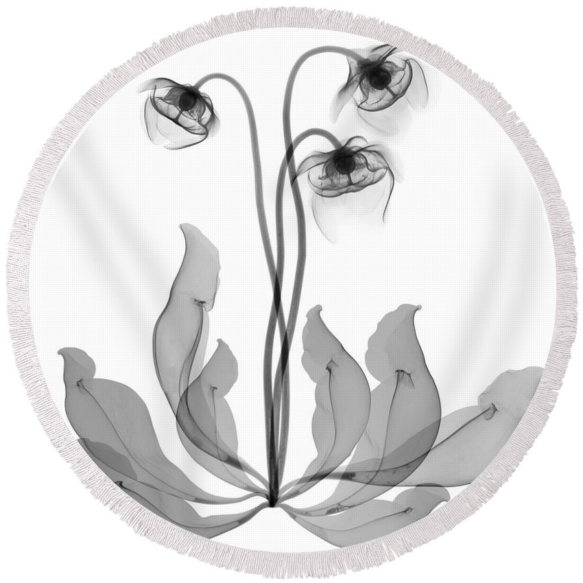 Science Round Beach Towel featuring the photograph Pitcher Plant Flowers, X-ray by Ted Kinsman