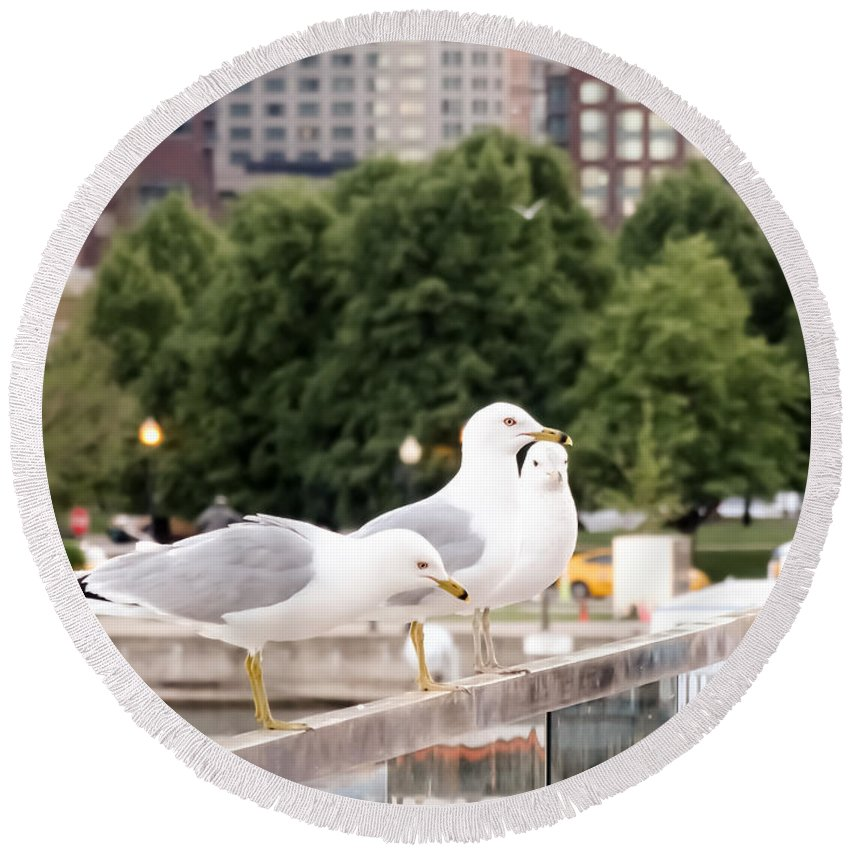 3 Seagulls In A Row Round Beach Towel featuring the photograph 3 Seagulls In A Row by Cynthia Woods