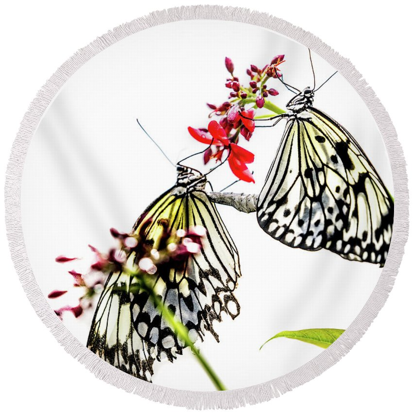 Fine Art Round Beach Towel featuring the photograph The Extraordinary Rice Paper Butterfly A Series by Darby Donaho