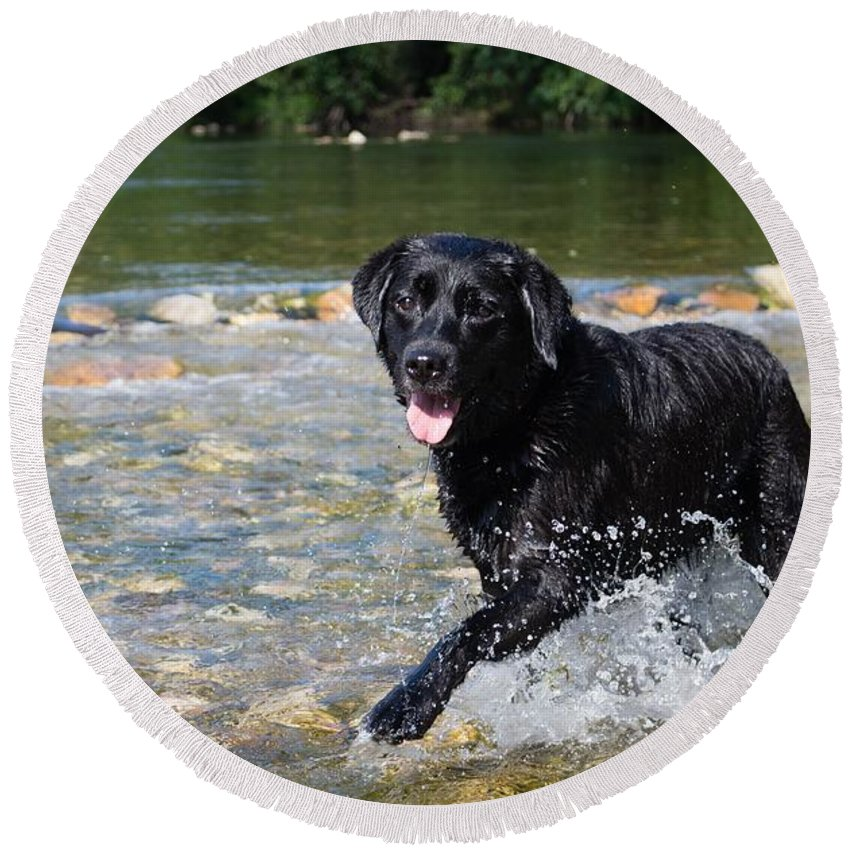 Round Beach Towel featuring the photograph Dog by FL collection