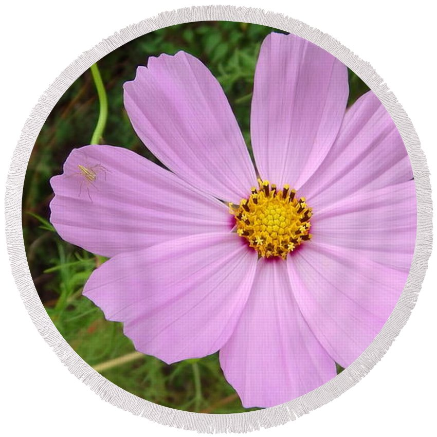 Australia Mauve Flower With Red Inner Ring And Yellow Pollen Heart Centre Round Beach Towel featuring the photograph Australia - Mauve Flowers by Jeffrey Shaw