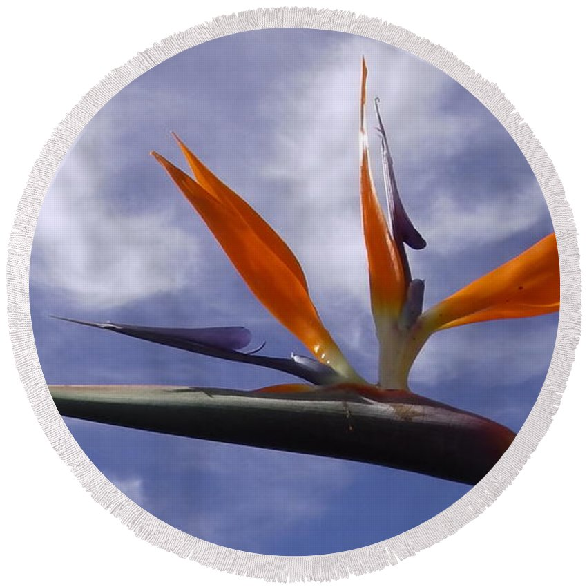 Australia Round Beach Towel featuring the photograph Australia - Bird Of Paradise On Blue by Jeffrey Shaw