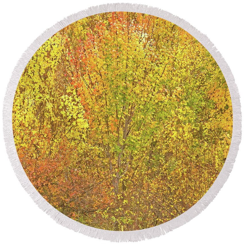 Autumn Colours Round Beach Towel featuring the photograph 3991 Autumn Profusion by Darrel Giesbrecht