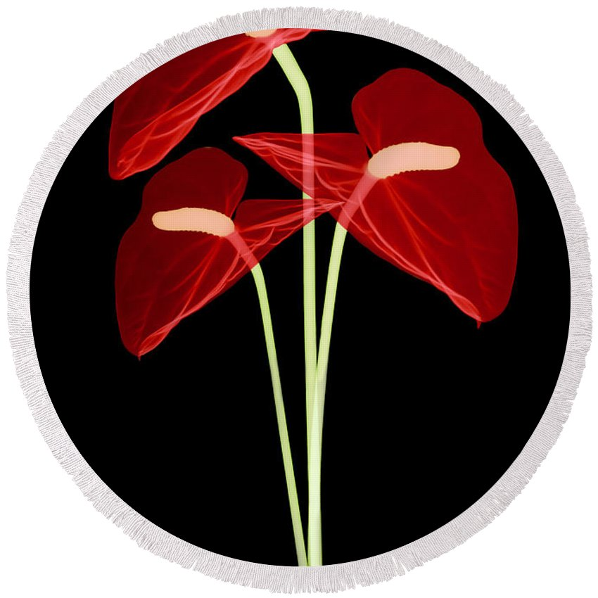 Science Round Beach Towel featuring the photograph Anthurium Flowers, X-ray by Ted Kinsman