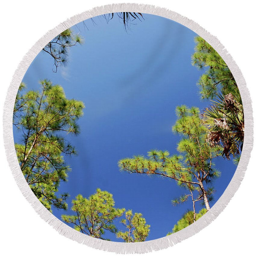 Cypress Trees Round Beach Towel featuring the photograph 4- Cypress Trees by Joseph Keane