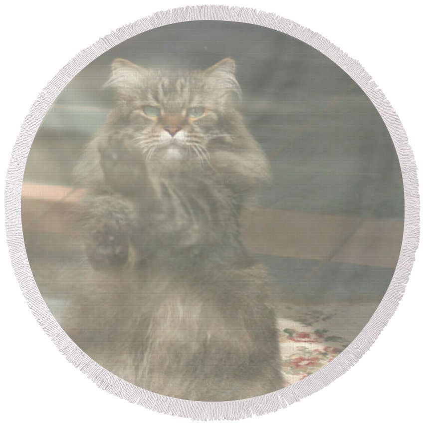 Maine Coon Round Beach Towel featuring the photograph Maine Coon by Michael Munster