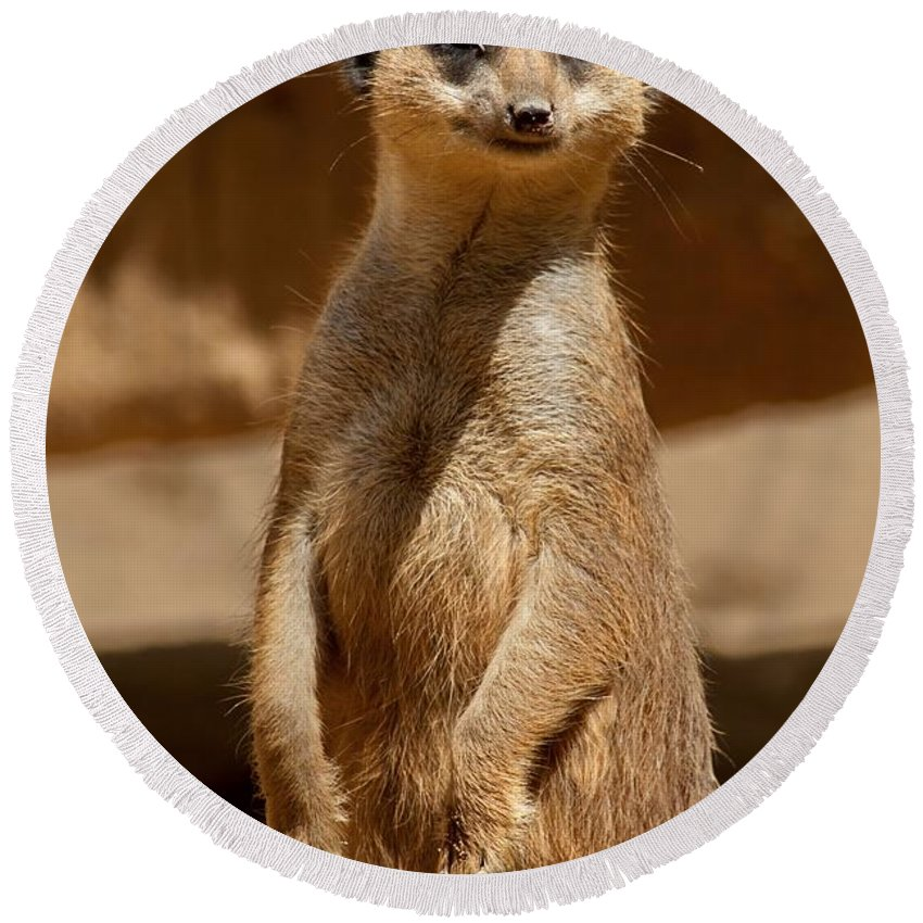 Meerkat Round Beach Towel featuring the photograph Meerkat by FL collection