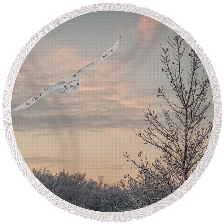 Snowy Owl Round Beach Towel featuring the photograph Snowy Owl Glide by Patti Deters