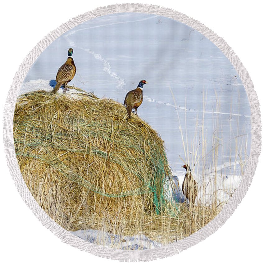 Round Beach Towel featuring the photograph 4 Roosters And A Hen by Dan Kinghorn