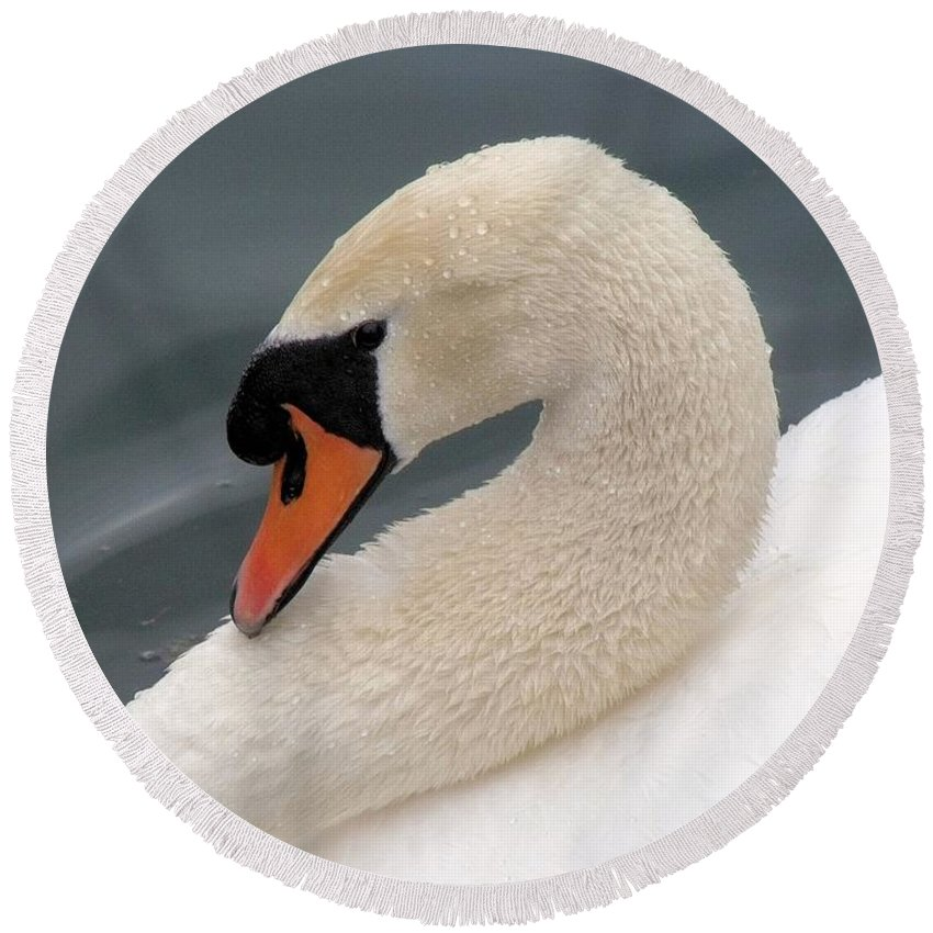 Swan Round Beach Towel featuring the photograph Swan by FL collection