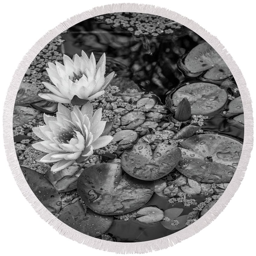 Lily Pad Round Beach Towel featuring the photograph 4445- Lily Pads Black And White by David Lange