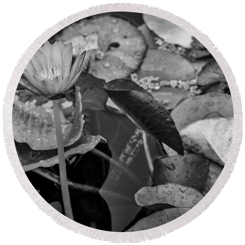 Lily Pad Round Beach Towel featuring the photograph 4466- Lily Pads Black And White by David Lange
