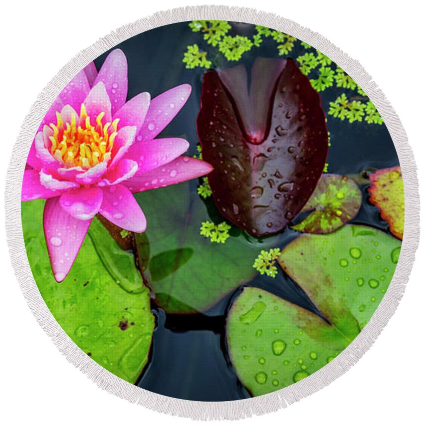 Lily Pad Round Beach Towel featuring the photograph 4475- Lily Pads by David Lange