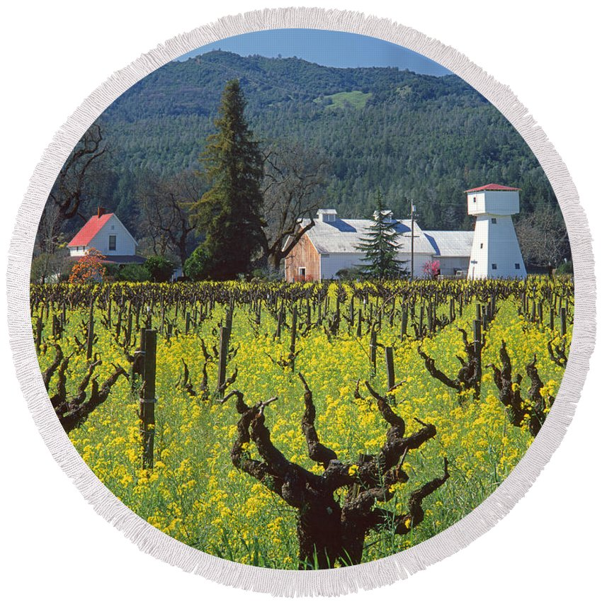 Mustard Round Beach Towel featuring the photograph 4b6394 Mustard In The Vineyards by Ed Cooper Photography