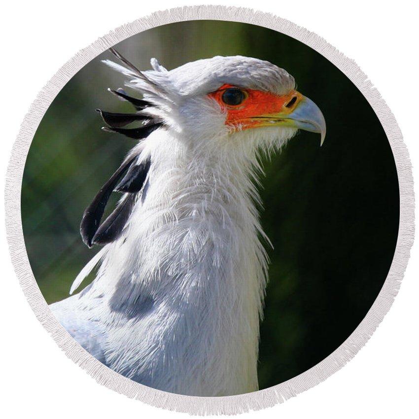 Bird Round Beach Towel featuring the photograph Bird by Hristo Shanov
