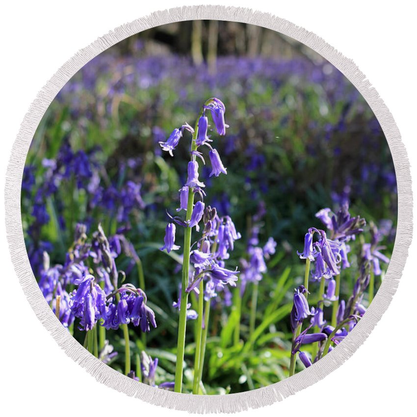 Bluebells Near Effingham In The Surrey Hills England Uk Round Beach Towel featuring the photograph Bluebells Near Effingham In The Surrey Hills England Uk by Julia Gavin