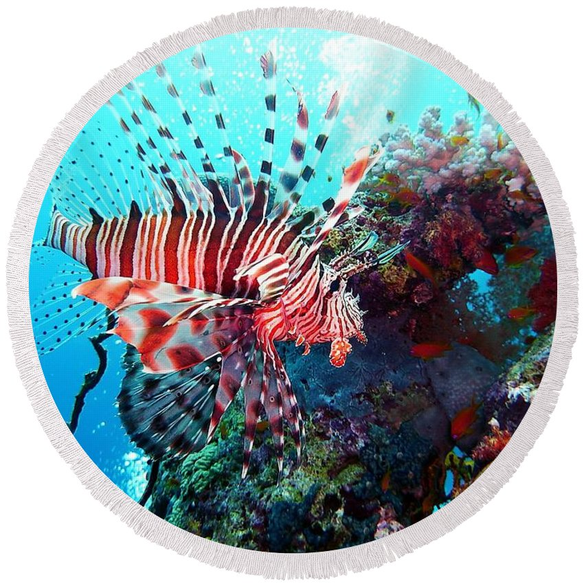 Fish Round Beach Towel featuring the photograph Fish by FL collection