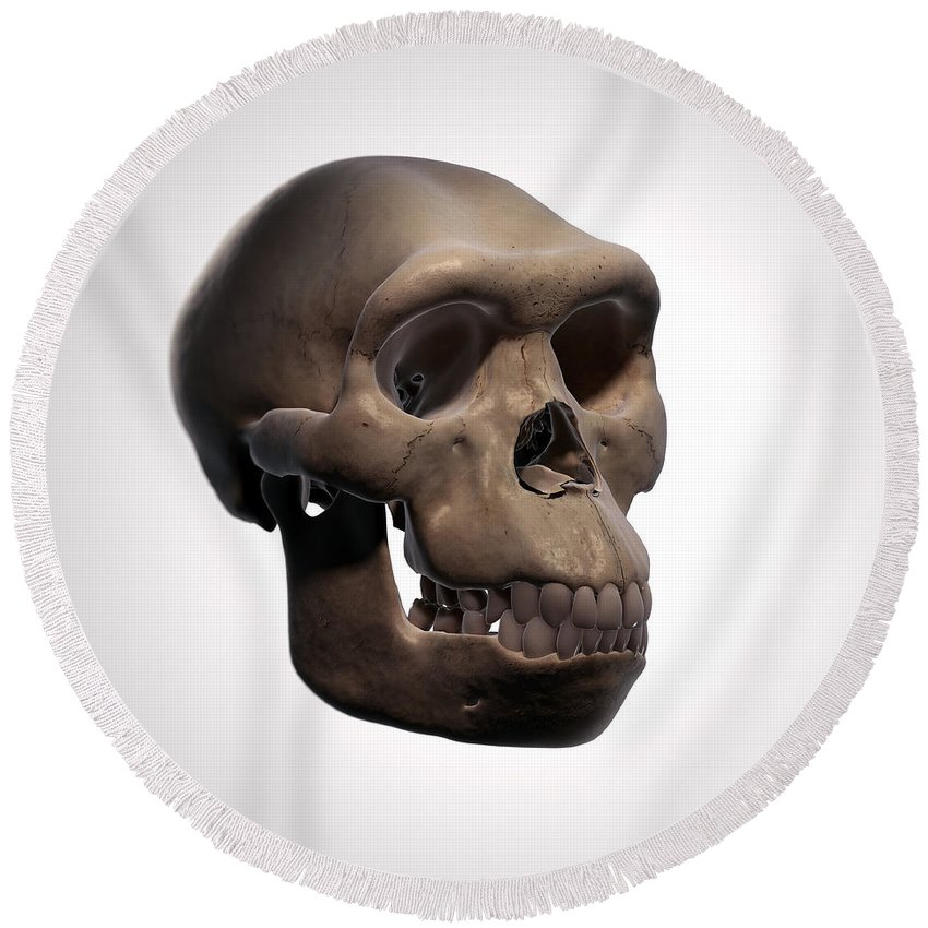 Digitally Generated Image Round Beach Towel featuring the photograph Homo Habilis Skull by Science Picture Co