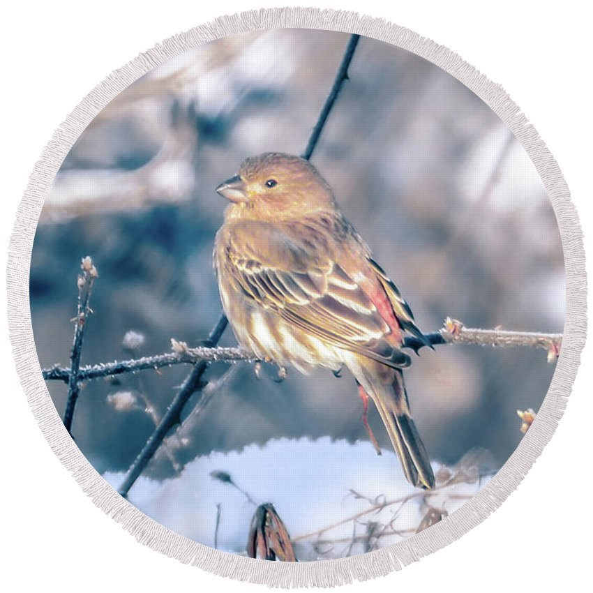 Tree Round Beach Towel featuring the photograph House Finch Tiny Bird Perched On A Tree by Alex Grichenko