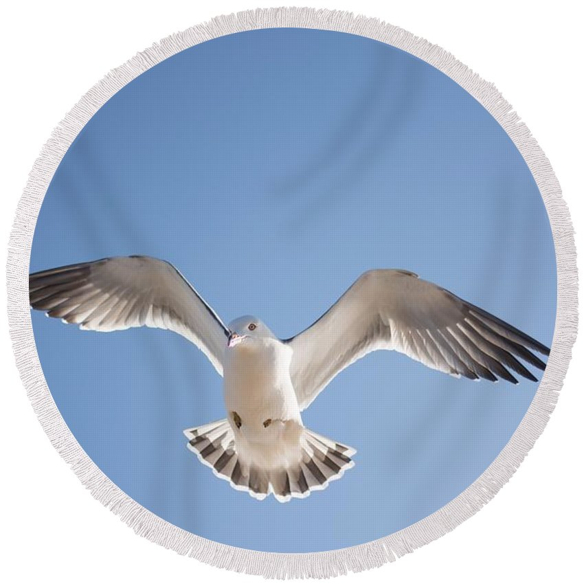 Bird Round Beach Towel featuring the photograph Seagull by FL collection