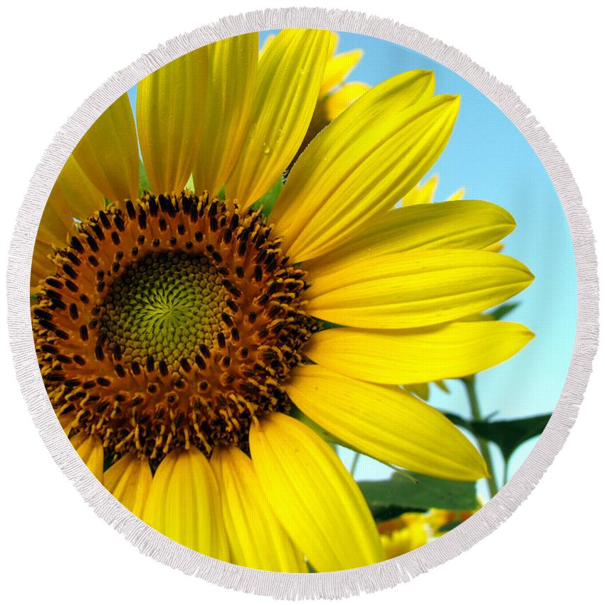 Sunflowers Round Beach Towel featuring the photograph Sunflower Series by Amanda Barcon