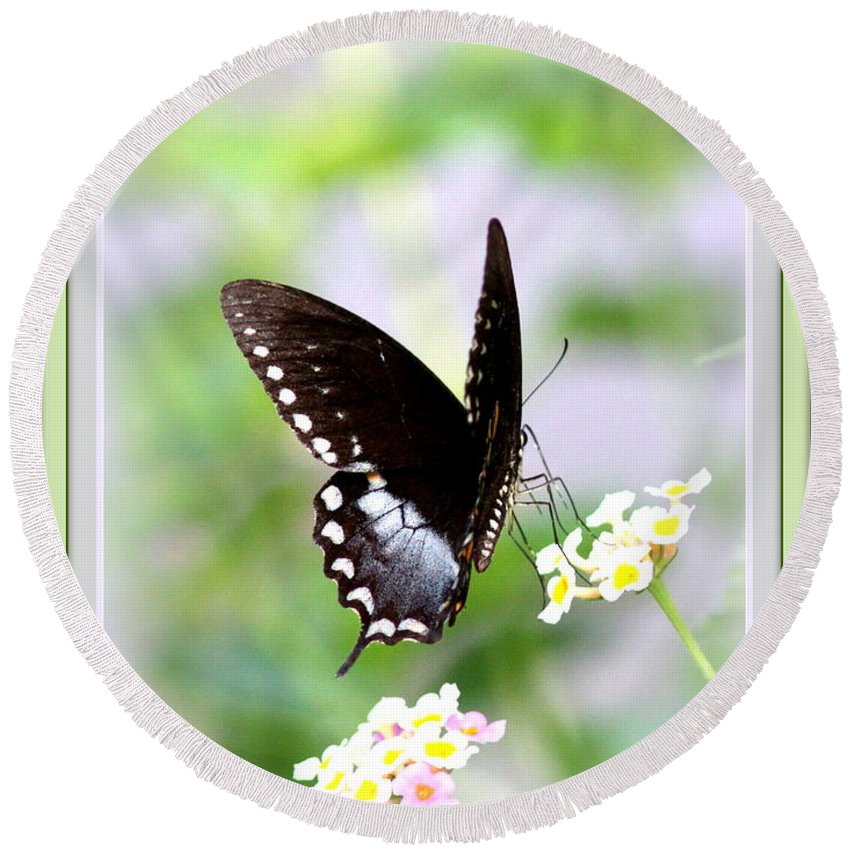 5276-001 Round Beach Towel featuring the photograph 5276-001- Butterfly - Swallowtail by Travis Truelove