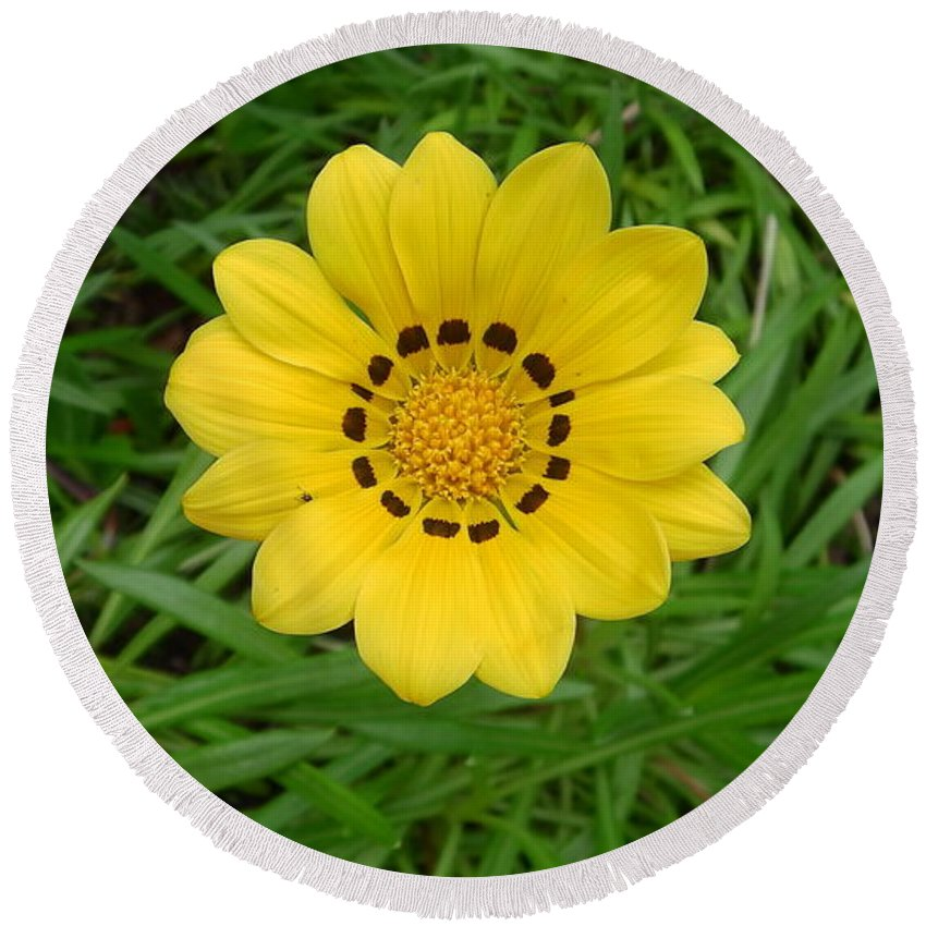 Australia Round Beach Towel featuring the photograph Australia - Daisy With Yellow Petals by Jeffrey Shaw
