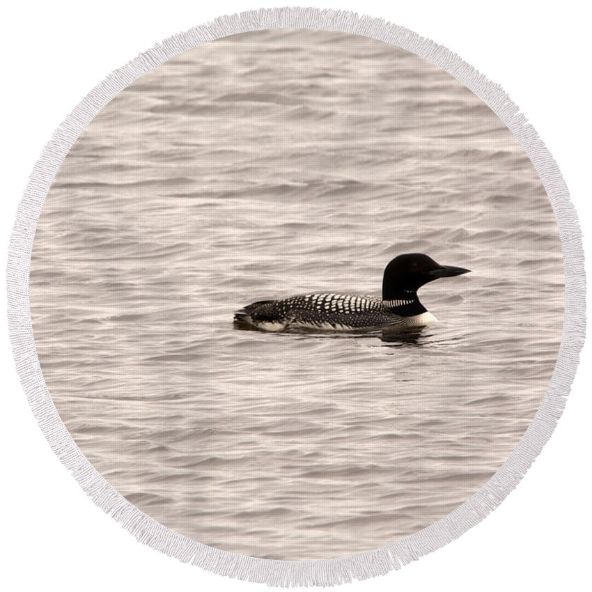 Common Loon Round Beach Towel featuring the photograph Black And White by Linda Kerkau