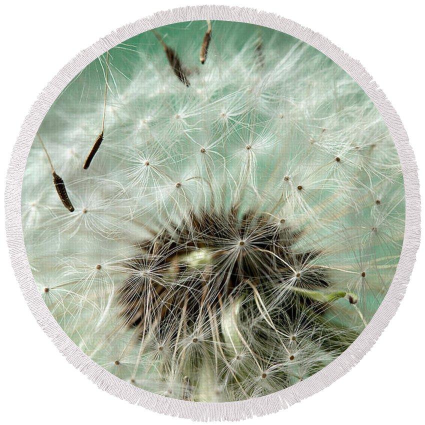 Dandelion Round Beach Towel featuring the photograph Dandelion Seeds On Flower Head by Donald Erickson
