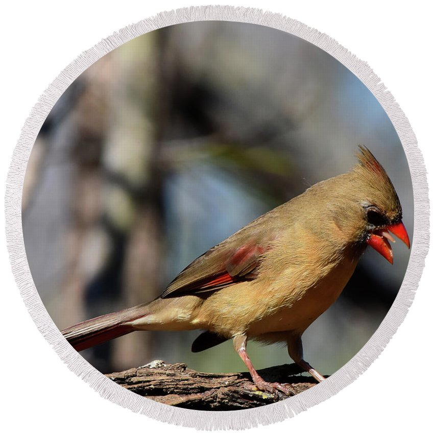 Cardinal Round Beach Towel featuring the photograph Female Cardinal by Dwight Eddington