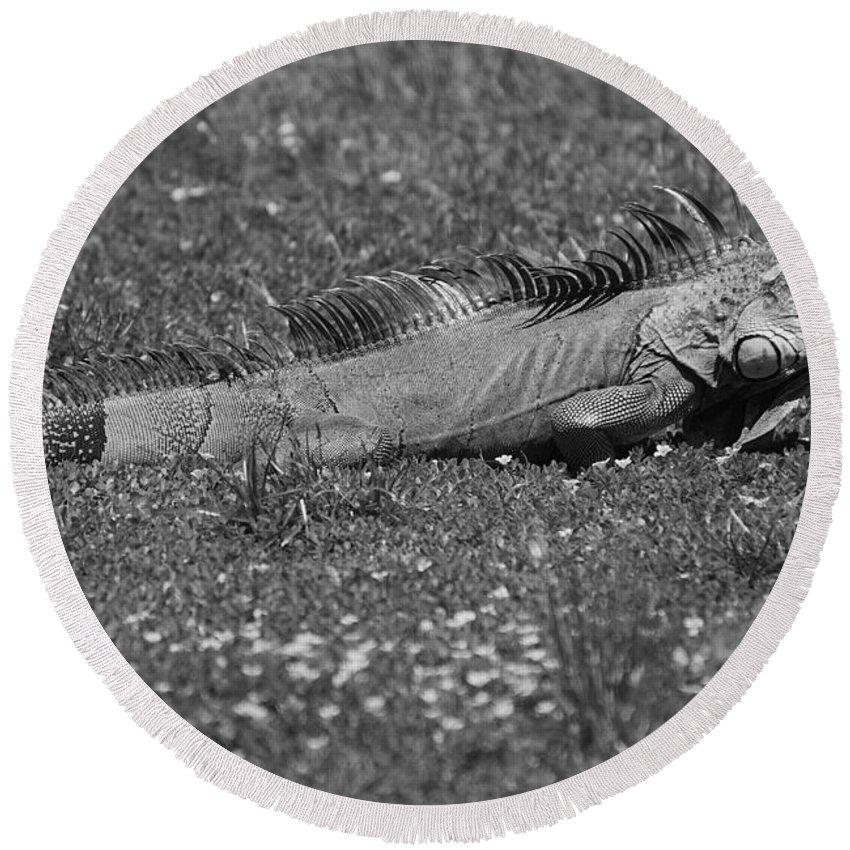 Sun Round Beach Towel featuring the photograph I Iguana by Rob Hans
