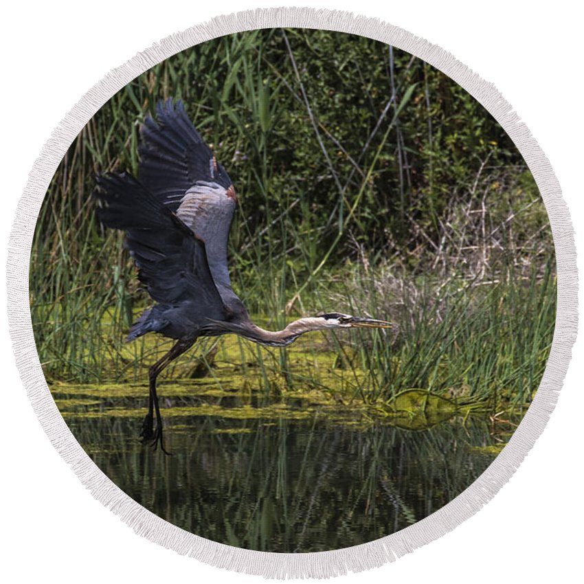 Wildlife Round Beach Towel featuring the photograph The Great Blue Heron by Steven Clair