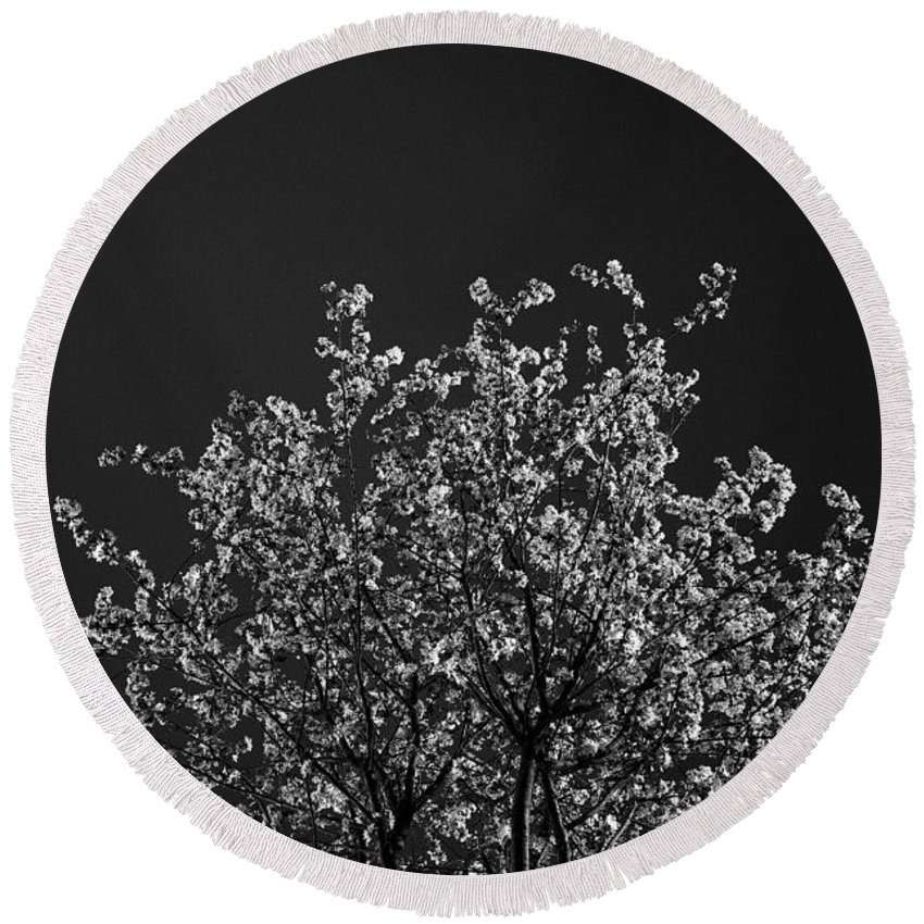 Trees Round Beach Towel featuring the photograph Treetop by FL collection