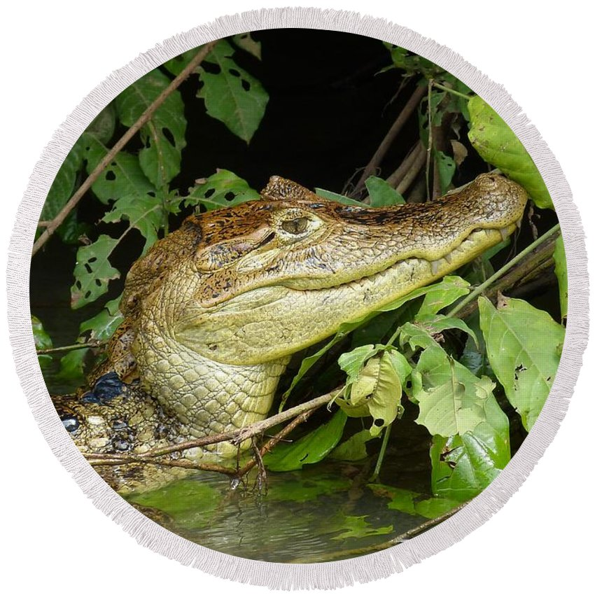 Animal Round Beach Towel featuring the photograph Crocodile by FL collection