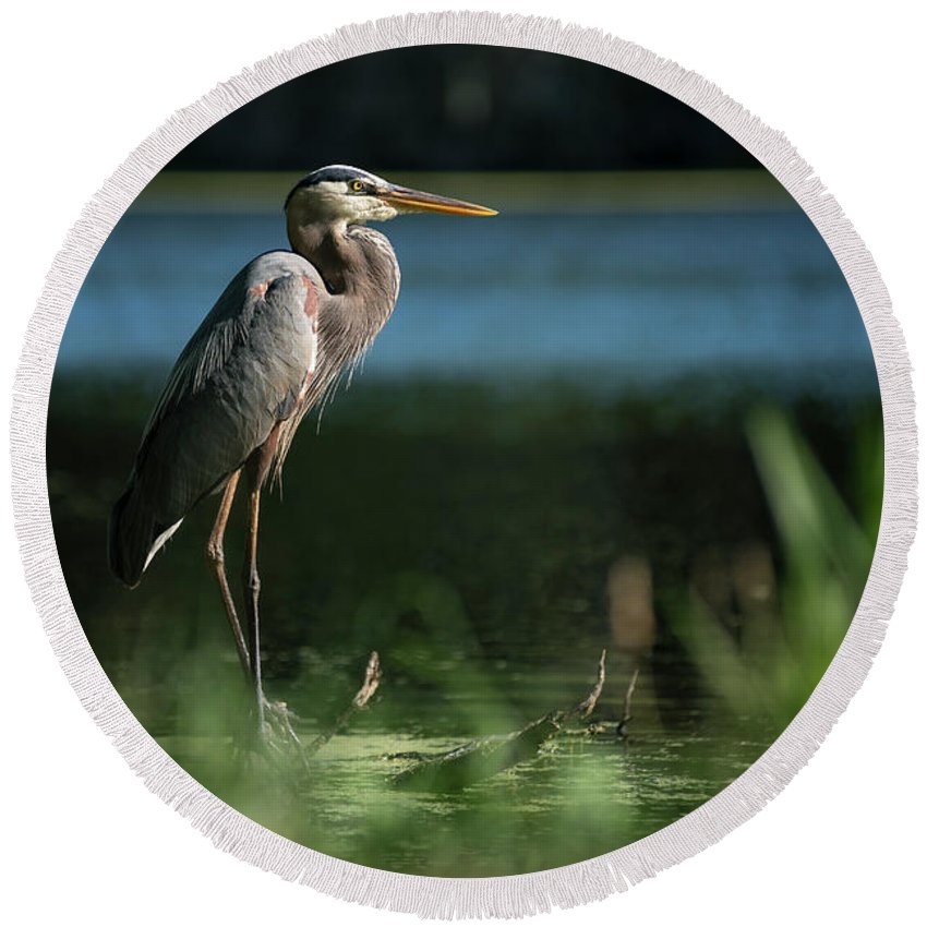 Birds Round Beach Towel featuring the photograph Great Blue Heron by Gunter Weber