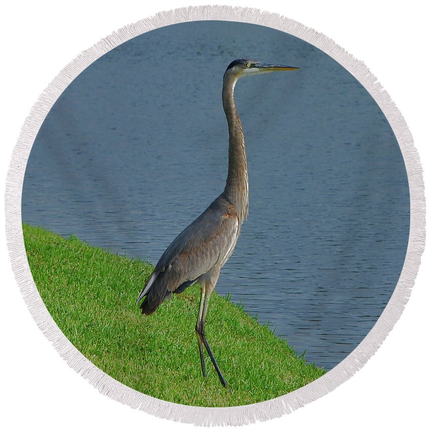 Great Round Beach Towel featuring the photograph 7- Great Blue Heron by Joseph Keane