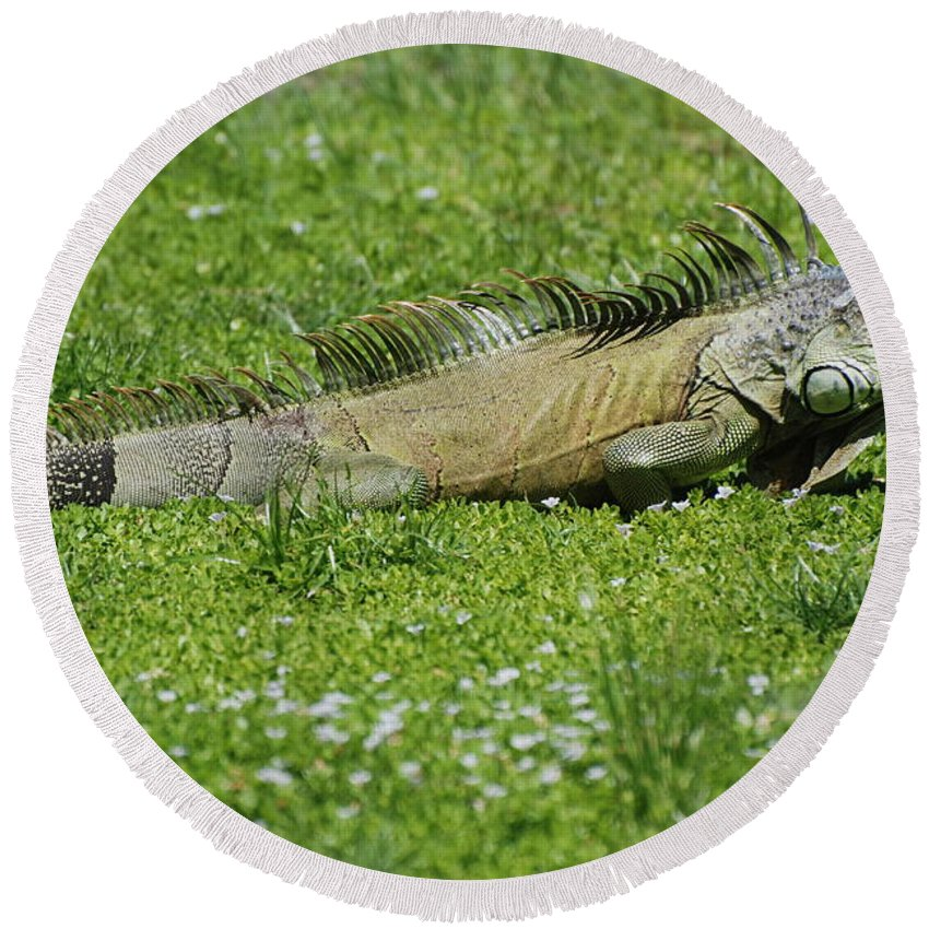 Macro Round Beach Towel featuring the photograph I Iguana by Rob Hans