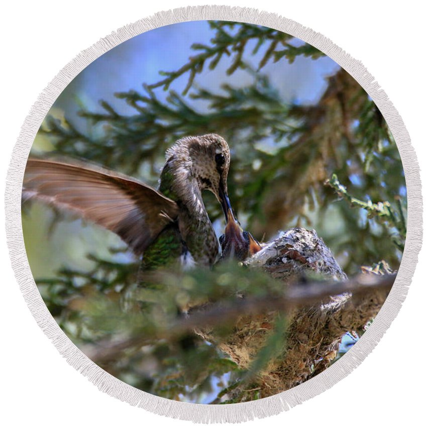 Round Beach Towel featuring the photograph 7311 Tilted Nest Feeding by Craig Corwin