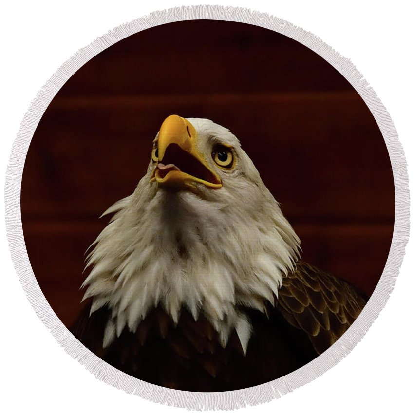 Eagles Round Beach Towel featuring the photograph Eagle by Mark Madion