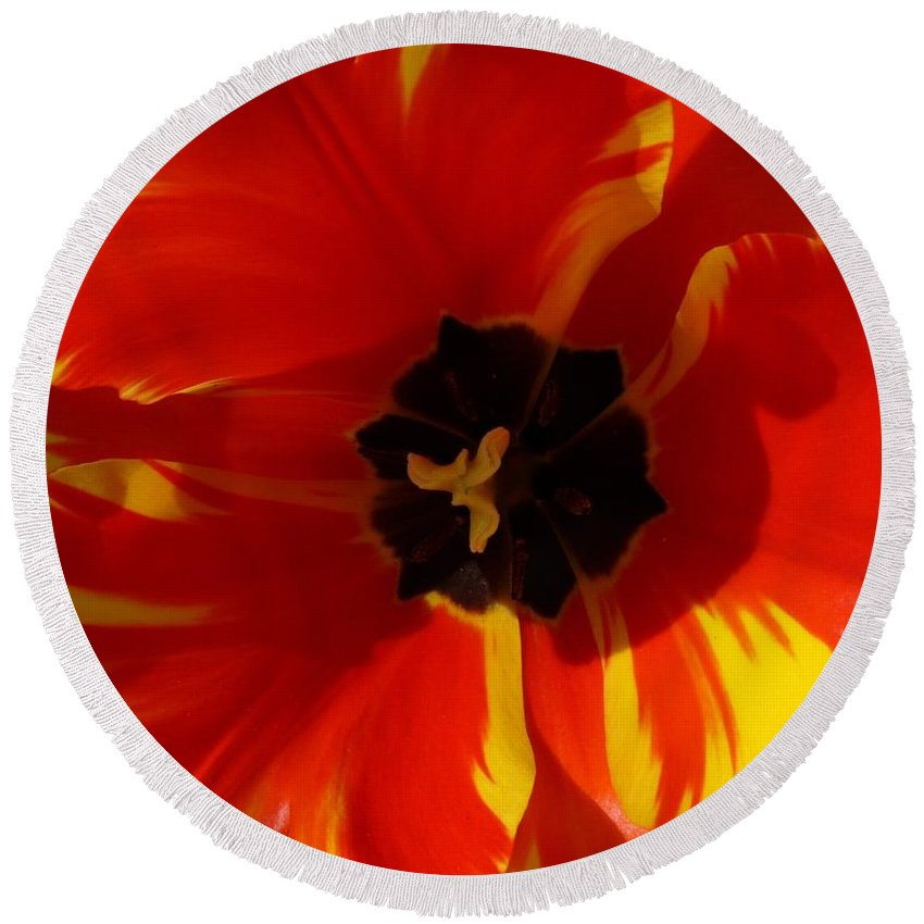 Flower Round Beach Towel featuring the photograph Tulip by FL collection