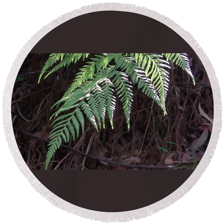 Australia Round Beach Towel featuring the photograph Australia - Hare's Foot Fern by Jeffrey Shaw