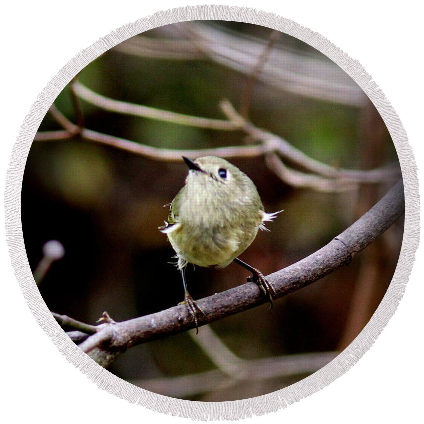 Ruby-crowned Kinglet Round Beach Towel featuring the photograph 9343-00-ruby-crowned Kinglet by Travis Truelove