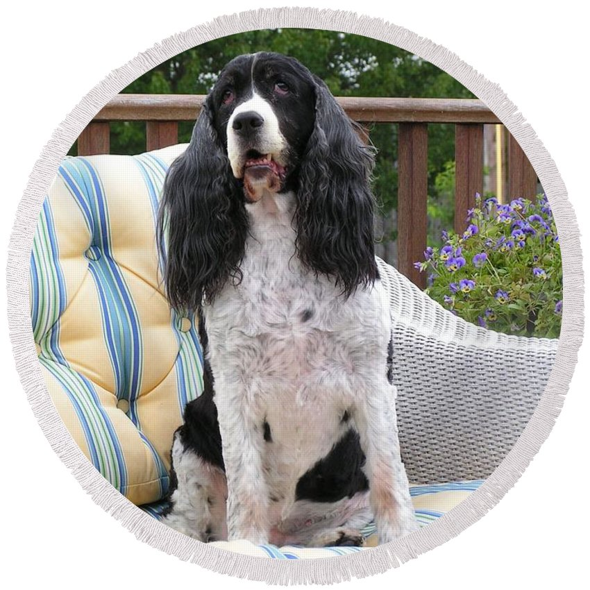 #940 D1035 Farmer Browns Springer Spaniel Round Beach Towel featuring the photograph #940 D1035 Farmer Browns Springer Spaniel by Robin Lee Mccarthy Photography