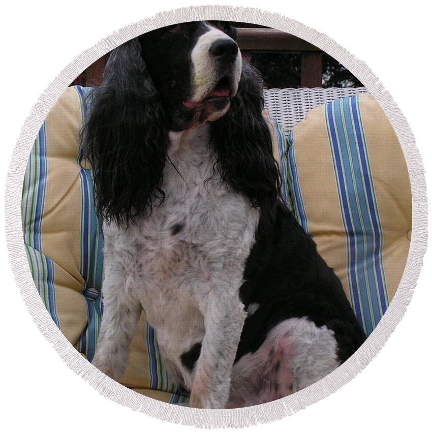 #940 D1045 Farmer Browns Springer Spaniel Round Beach Towel featuring the photograph #940 D1045 Farmer Browns Springer Spaniel by Robin Lee Mccarthy Photography