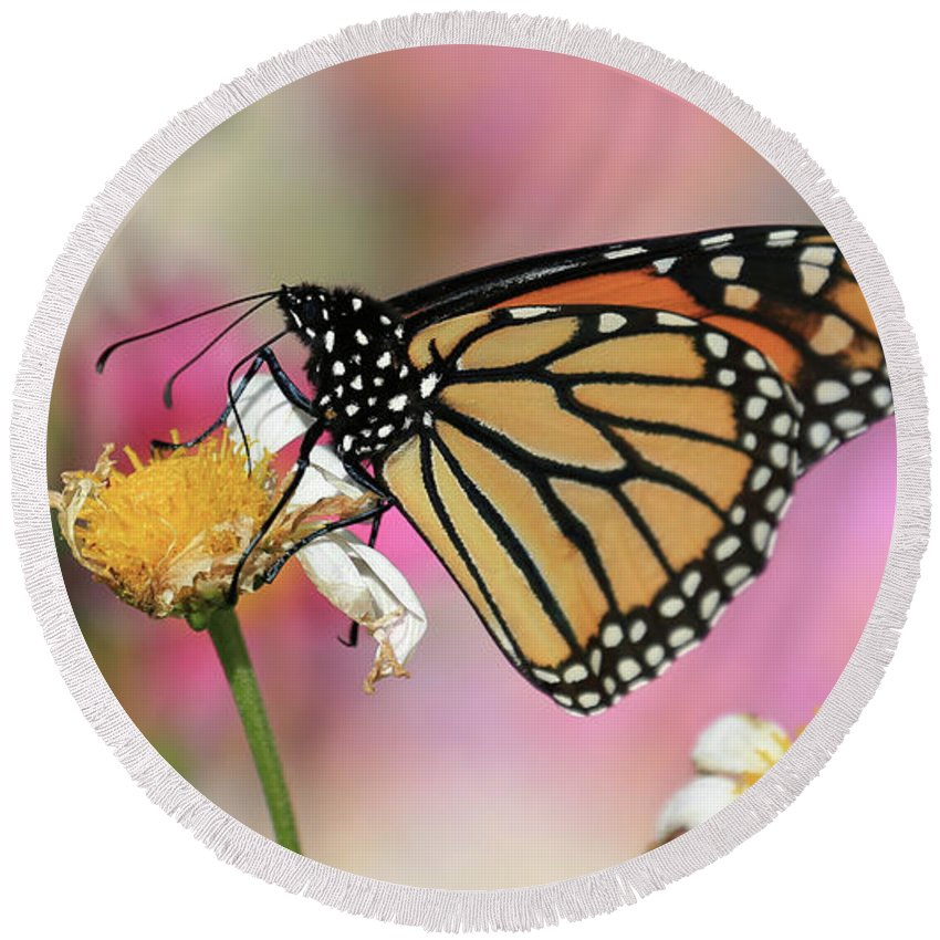 Beautiful Round Beach Towel featuring the photograph A Beautiful Monarch by Paul Ranky