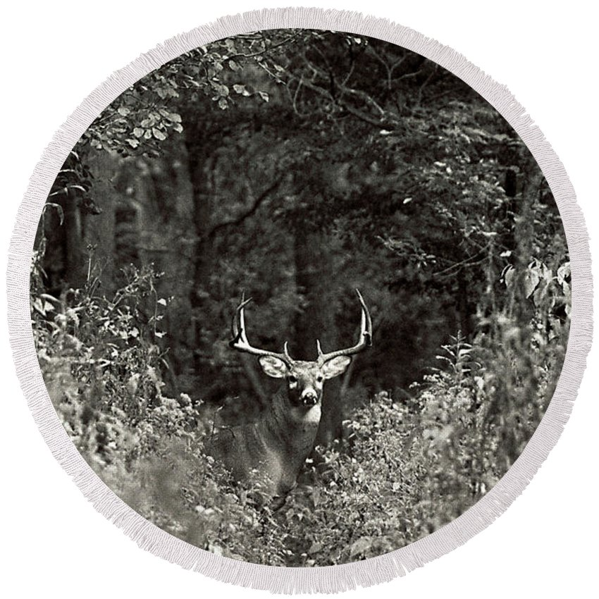 Black And White Round Beach Towel featuring the photograph A Big Buck In Rut by John Harmon