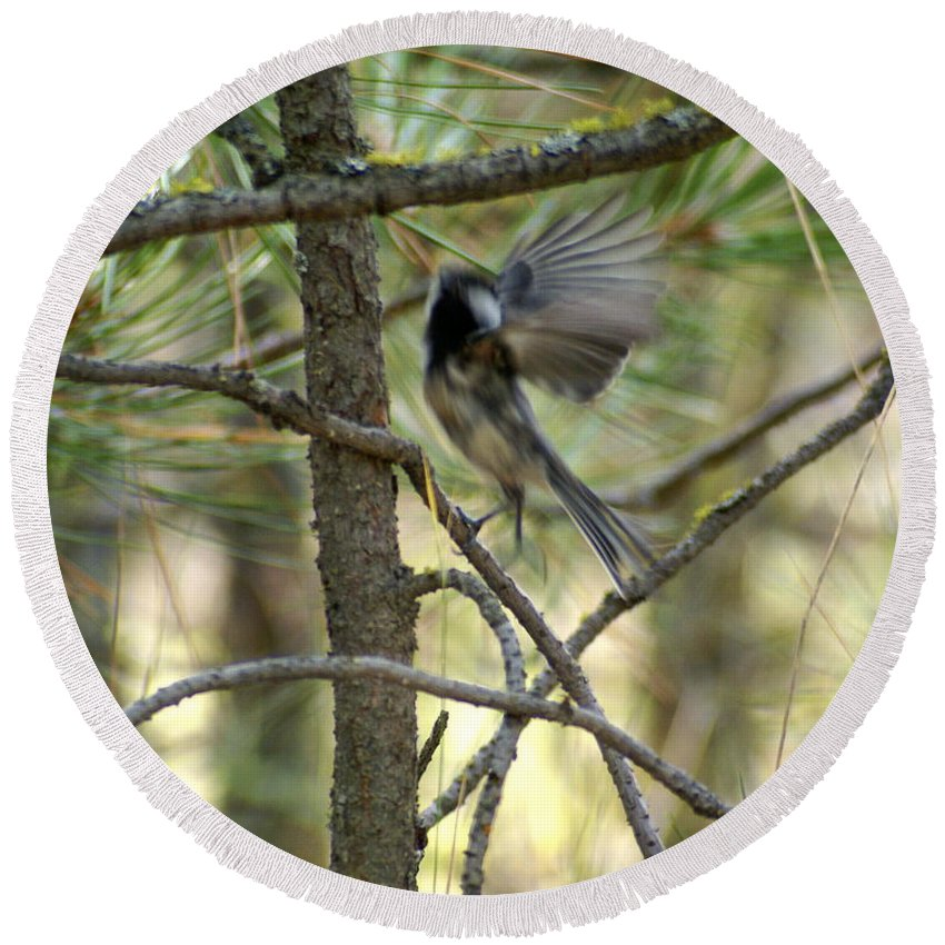 Birds Round Beach Towel featuring the photograph A Black Capped Chickadee Taking Off by Ben Upham III