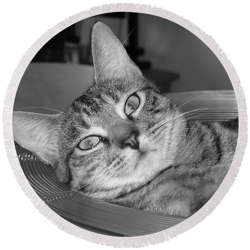 Cat Round Beach Towel featuring the photograph A Bowl Of Ginger by Maria Bonnier-Perez