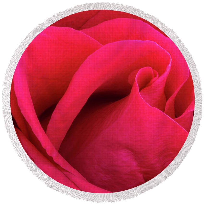 Flower Round Beach Towel featuring the photograph A Bright Pink Rose Close-up by Iordanis Pallikaras